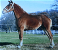 <span class='eventTitle'>RESCHEDULED TO MAY 27-29: Midwest Select Draft Horse Sale</span>